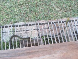 snake - 1