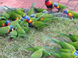 birds - 1 (1)