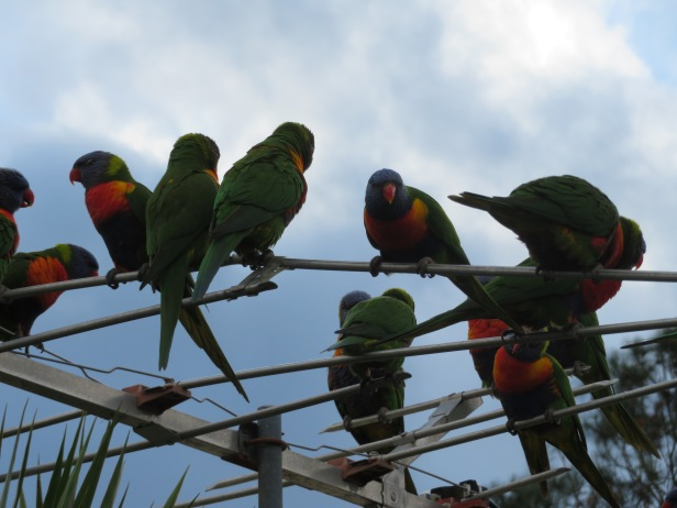 birds - 1 (2).jpg