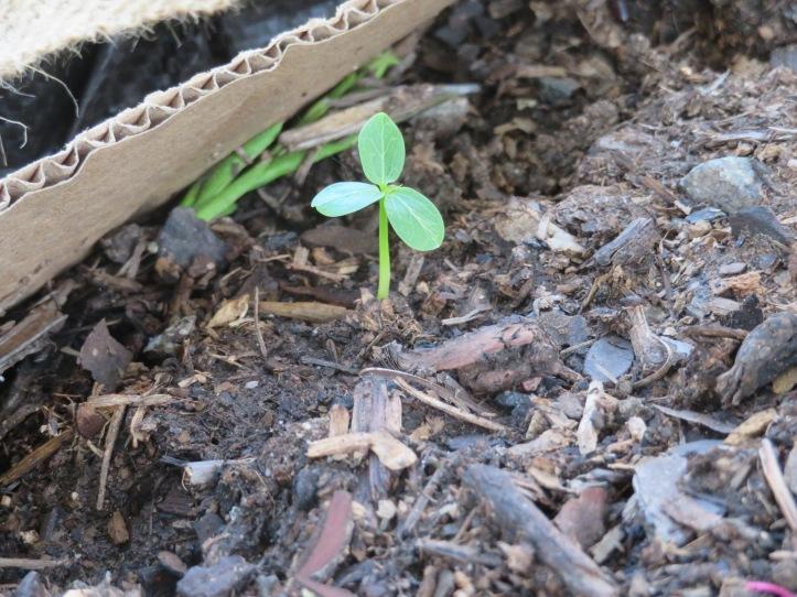 garden - 3.jpg