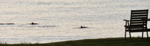 dolphins - 1 (1)