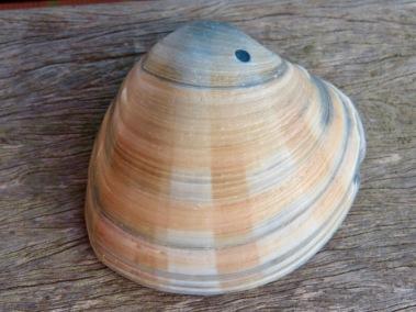 shells - 2